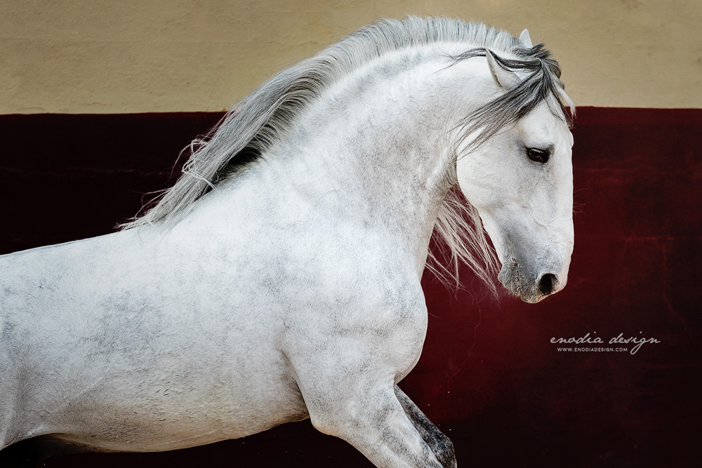 You're never too old to believe in your dreams… and unicorns. They exist, believe me, I've taken photos of one of them! Photo taken during Lusitano World's Photo Workshop with Rita Fernandes, at the Centro Equestre Celg ≈ © Giulia Basaglia - Enodia Design & Photography