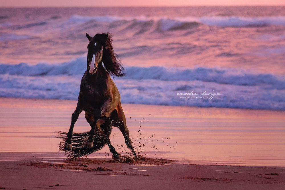 Golden hour, ocean and an amazing Lusitano stallion to photograph… what else could I ask for?! A moment I will never forget. Photo taken during Lusitano World's Photo Workshop with Rita Fernandes. ≈ © Giulia Basaglia - Enodia Design & Photography