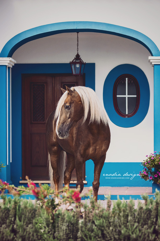 Ana Batista's Lusitano stallion, Biscoito, framed in the typical Portuguese architecture. How I loved this horse, such an eye catcher! Every time I browse through photos I took of him, I hardly stop myself from publish them all! Photo taken during Lusitano World's Photo Workshop with Rita Fernandes. © Giulia Basaglia - Enodia Design & Photography