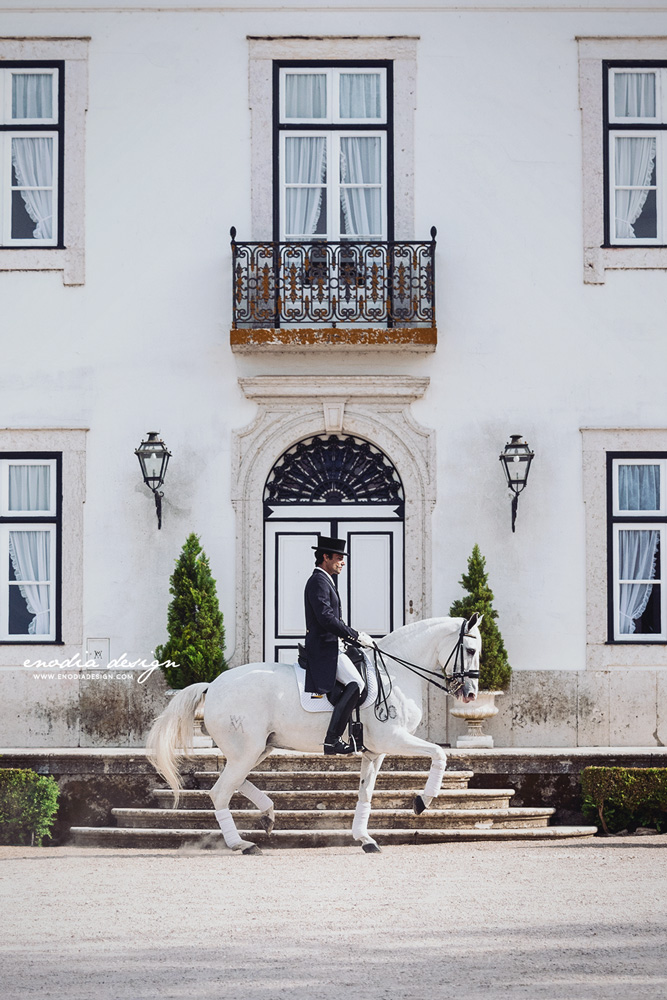 As I wrote in my previous posts, during the Photo Workshop in Portugal, we also had the opportunity to visit the Coudelaria Manuel Tavares Veiga and to photograph, not only extraordinary horses, but also the amazing rider Manuel Borba Veiga, here performing a superbe piaffe with his mare Bailarina! Photo taken during Lusitano World's Photo Workshop with Rita Fernandes. © Giulia Basaglia - Enodia Design & Photography